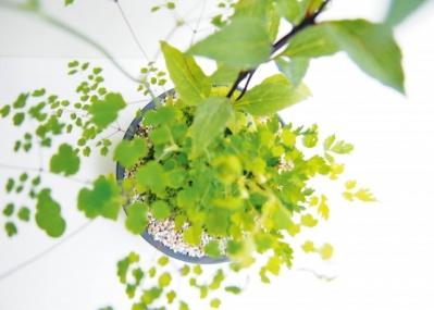 """「Pen」×「パナソニック ラムダッシュ」の特別な一夜へご招待! 日本が誇る伝統""""盆栽""""の実演も嗜めます。"""