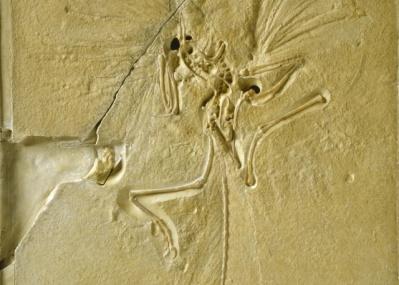 """""""呪いのアメジスト""""から始祖鳥まで、「大英自然史博物館展」の至宝たちに自然の驚異と人類の情熱を観る/"""