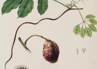 """""""図鑑""""にとどまらない美しさ。『川原慶賀の植物図譜』展で超絶写実を堪能しよう。"""
