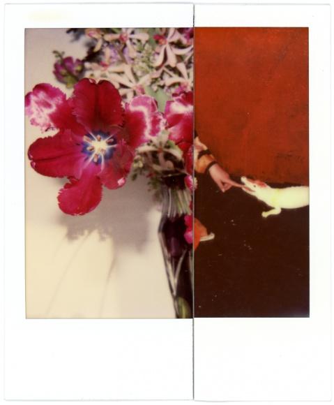 アラーキーのインスタントフィルム写真展「結界」は、新しいアートスペース「AM」にて。