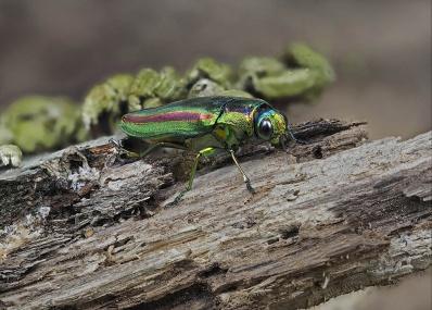 巨大サイズの昆虫があなたを虜にする!?  最新デジタル画像処理技術で見るマイクロ世界とは?