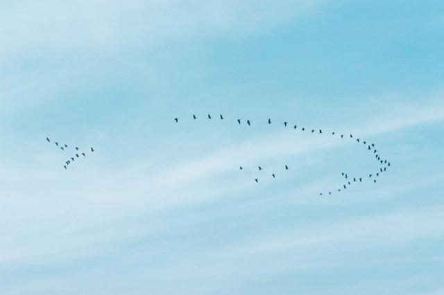 渡り鳥の姿を通して見た町の姿――野口里佳の新作展『鳥の町』、ギャラリー小柳で開催中。