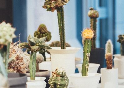 叢・小田康平さんが提案する、植物との暮らし。
