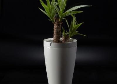 デジタルで、大切な植物と愛を育む方法。