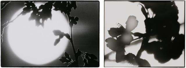 「山崎博 計画と偶然」に、クールなコンセプトに裏打ちされた静謐と豊饒を観る。